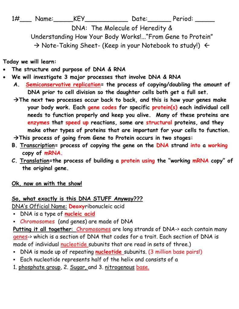 worksheet Heredity Worksheet note taking worksheet heredity genetics chapter 11 dna the molecule of mrs lamberts
