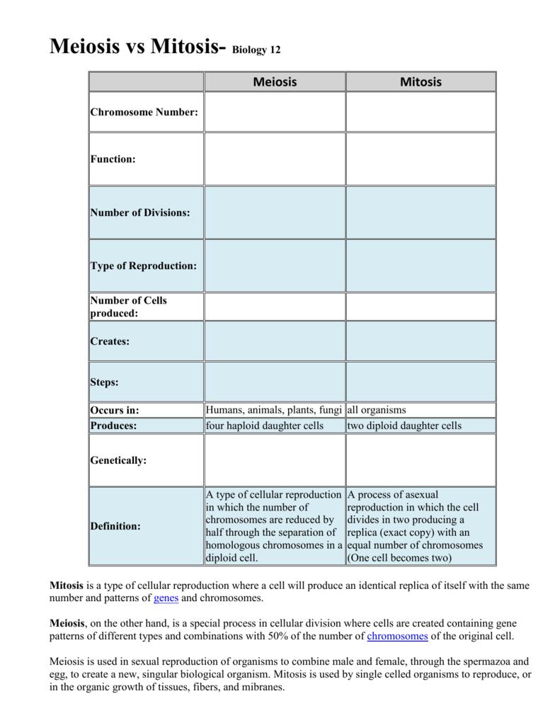 Meiosis Vs Mitosis Worksheet