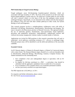 PhD Scholarship in Correlative Light and Electron Microscopy