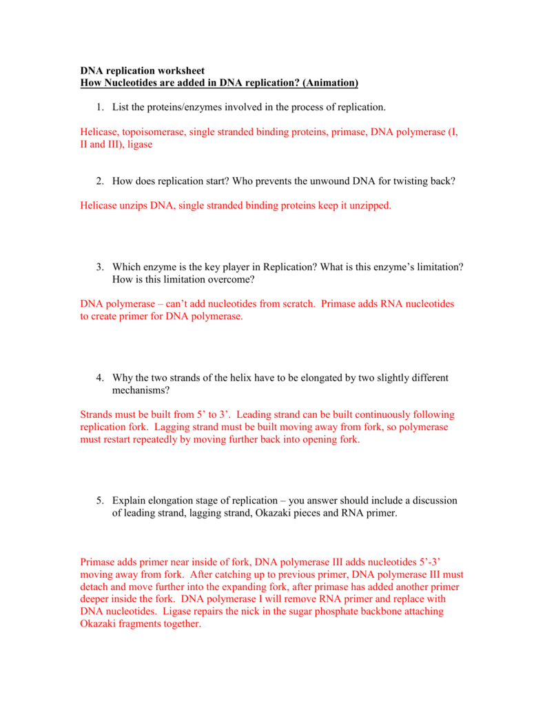 DNA replication worksheet Watch the animations and answer – Dna Replication Worksheet