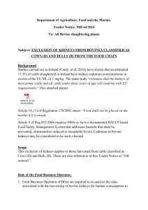 Trader Notice MH 44/2014 - Exclusion of Kidneys from Bovines