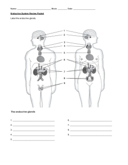 which is an endocrine function answers