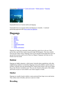 Marine Mammals - Dugongs - Department of the Environment