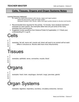 Success Criteria Cells Tissues Organs And Organ Systems