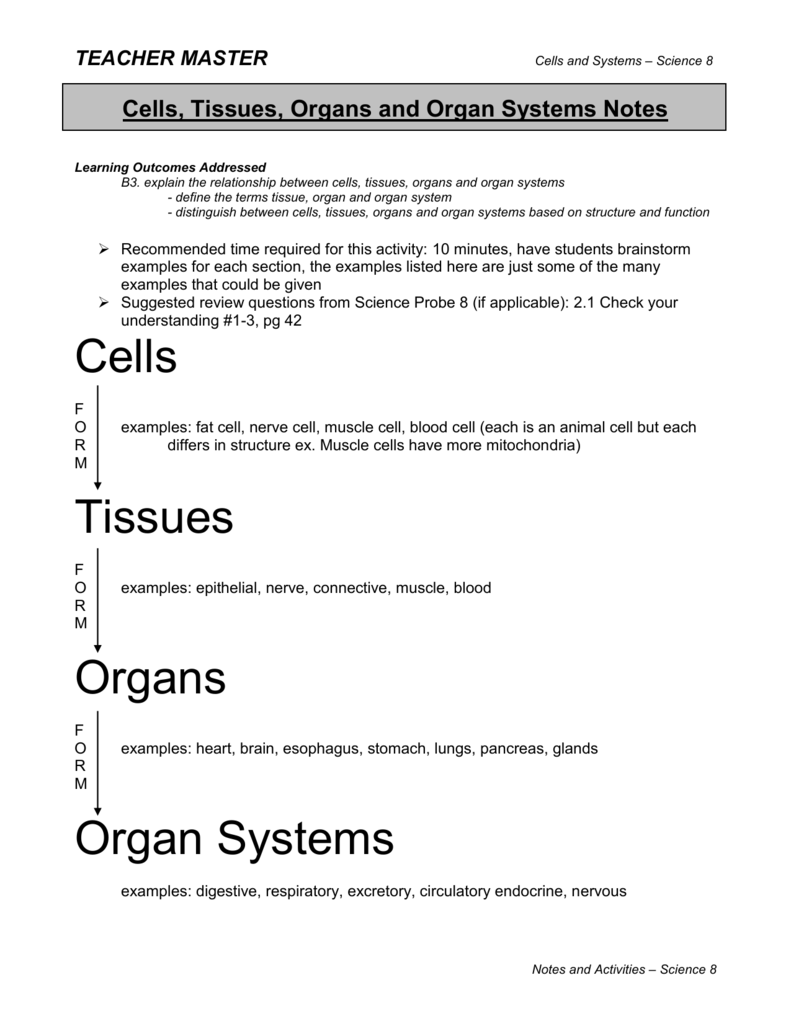 Cells Tissues Organs And Organ Systems Notes