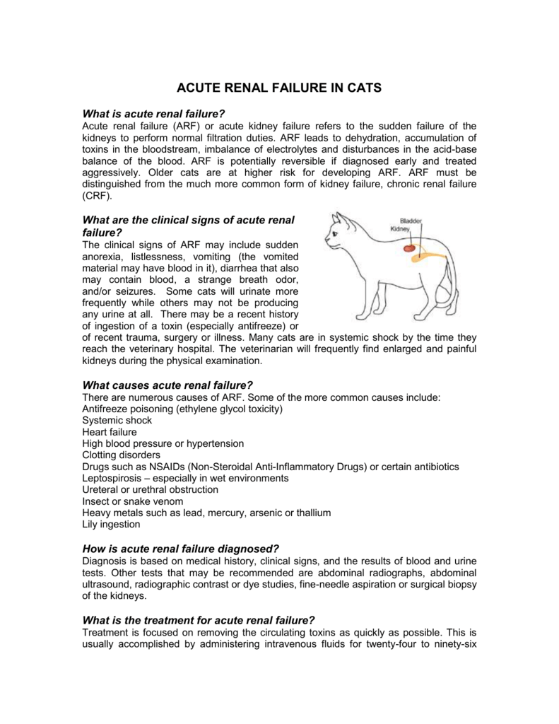 Acute Renal Failure In Cats Veterinary Clinic Of Myrtle Beach