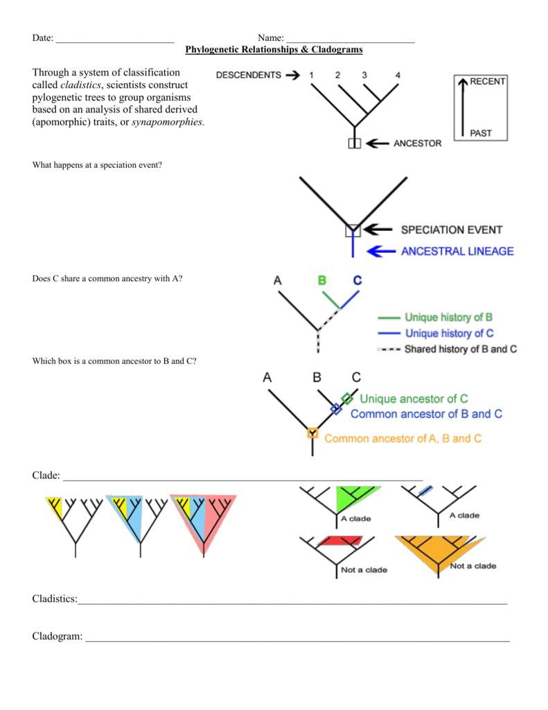 All Grade Worksheets Cladogram Practice Worksheet All Grade – Cladogram Worksheet
