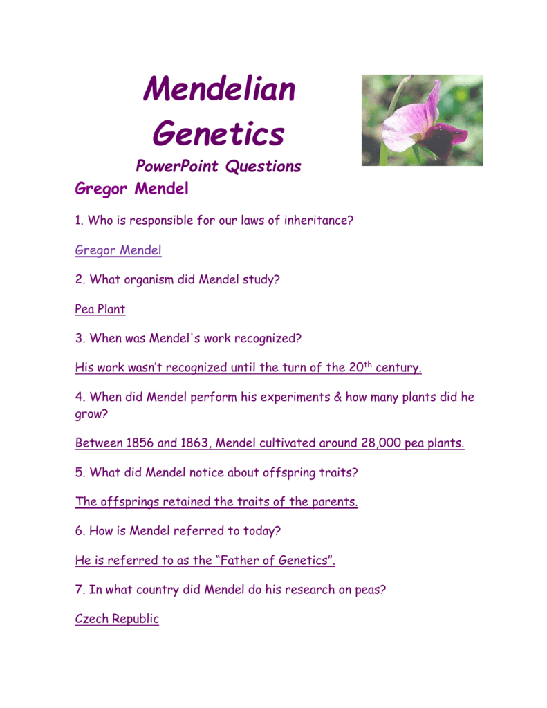 worksheet Gregor Mendel Worksheet mendelian genetics powerpoint questions gregor mendel 1 who is