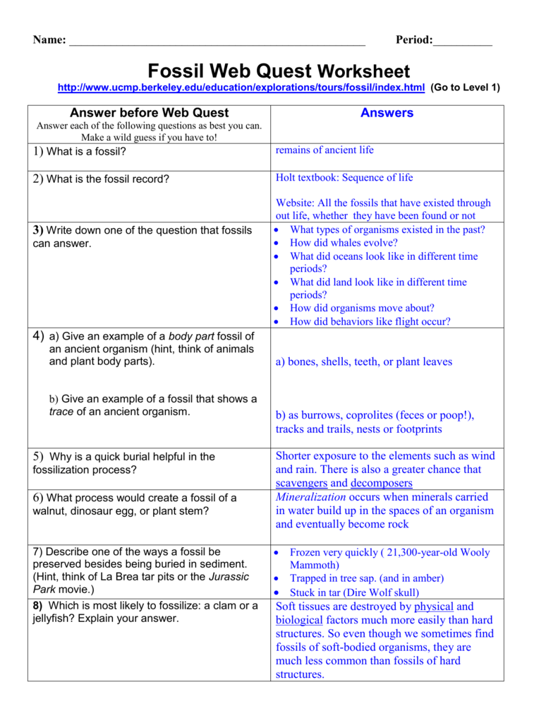 Fossil Web Quest Worksheet – Fossil Worksheet