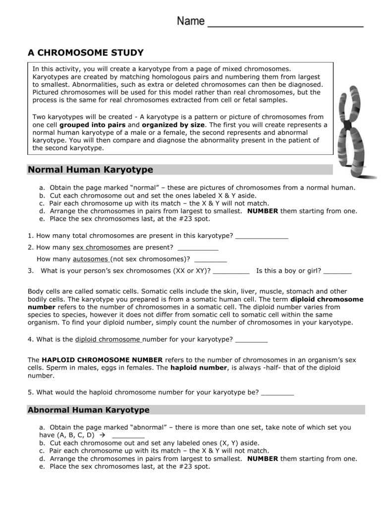 chromosomes worksheet answer for science chromosomes best free printable worksheets. Black Bedroom Furniture Sets. Home Design Ideas