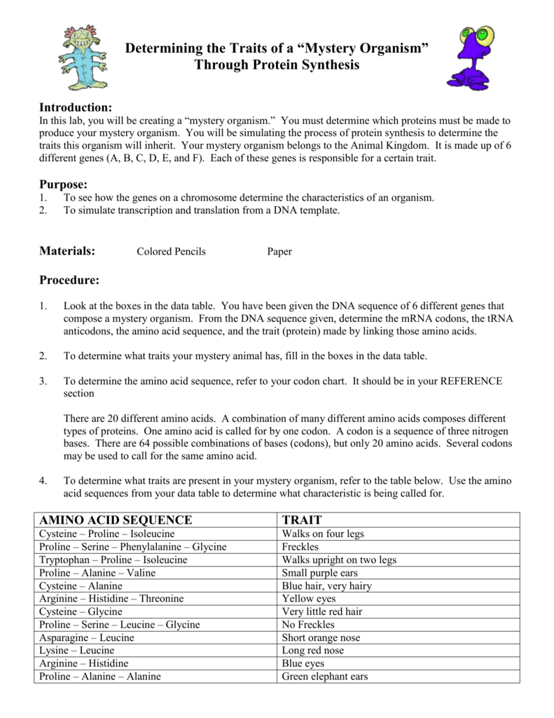 Determining the Traits of a Mystery Organism Through Protein – Protein Synthesis Worksheet Answer Key