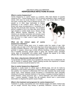 HERPESEVIRUS INFECTIONS IN DOGS