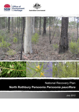 Persoonia pauciflora - Department of the Environment