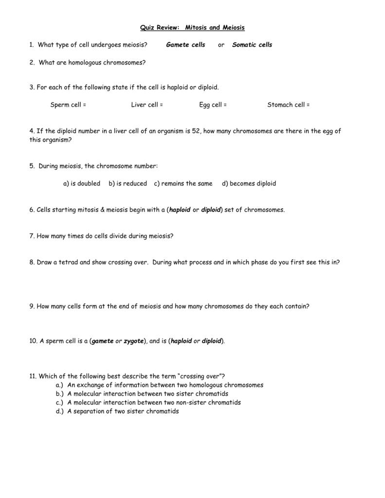Worksheets Meiosis Review Worksheet meiosis review worksheet