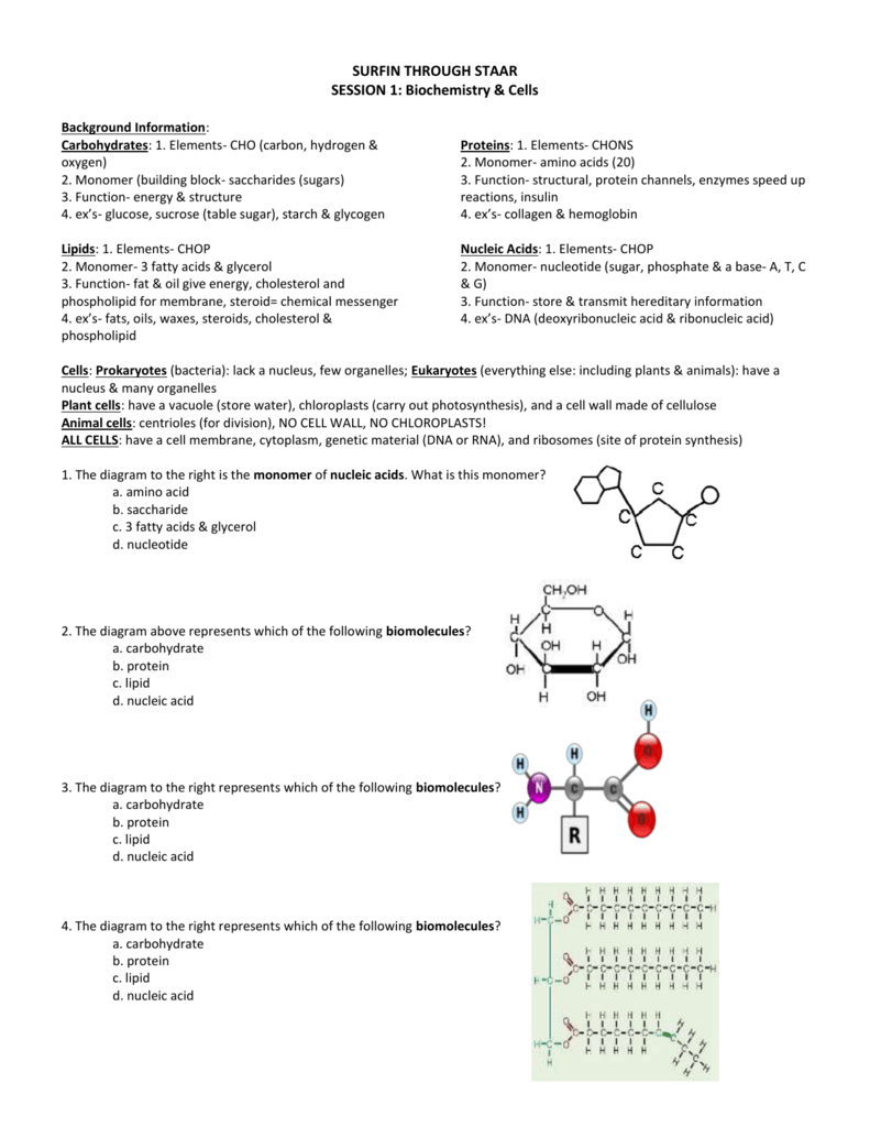 1- Biomolecules-Teacher Key