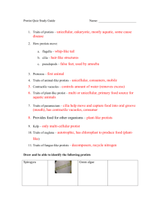 Protist Study Guide