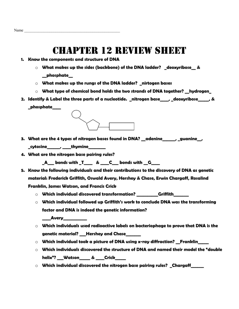 worksheet Chapter 11 Dna And Genes Worksheet Answers worksheets chapter 11 dna and genes worksheet answers biggone rna protein synthesis review