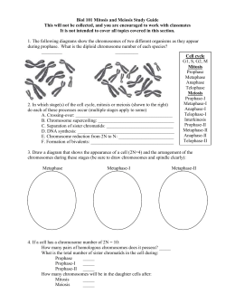 Mitosis & Meiosis Study Questions