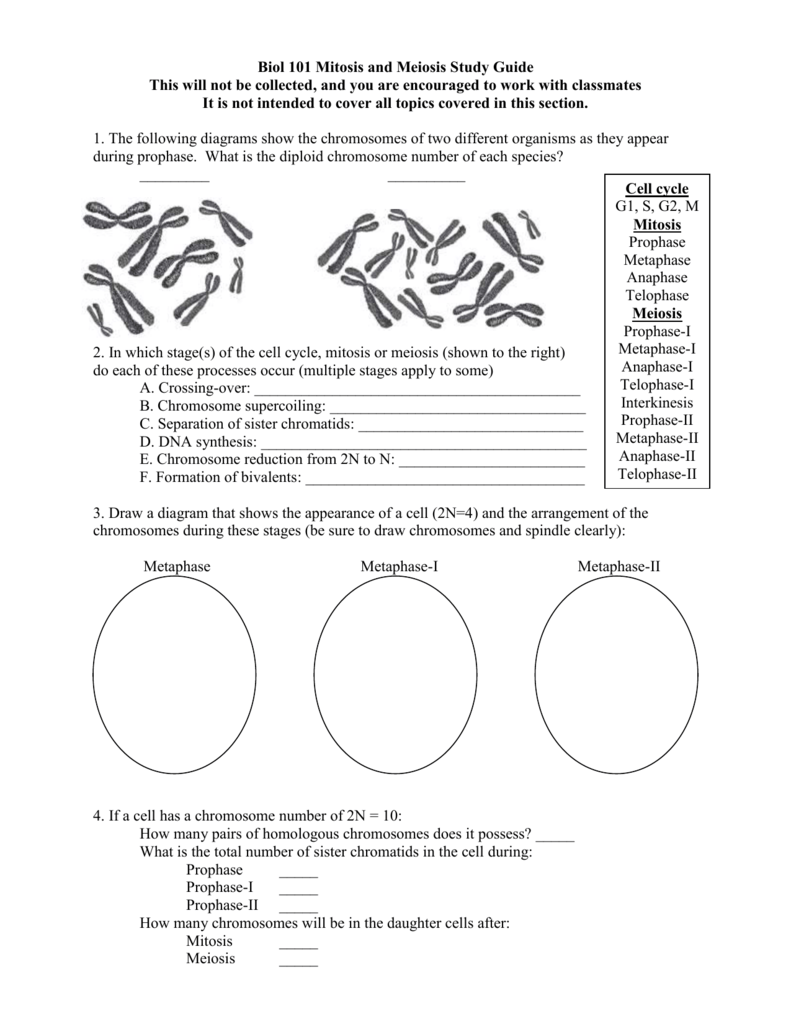 A Study Of The Basic Difference Between Mitosis And Manual Guide