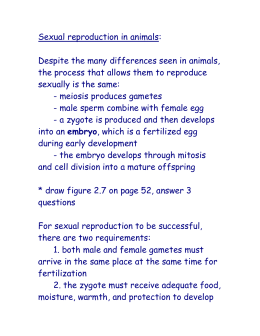 Sexual reproduction in animals:
