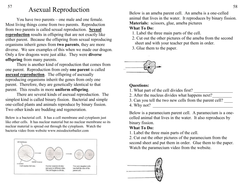 Cellular asexual reproduction video