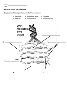 DNA Strucuture and Replication