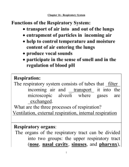 Wksts: Respiratory System Packet