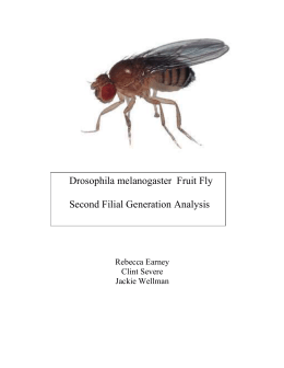Fruit Flies Full Lab Report