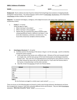 evidence of evolution science with ms tantri - Evidence Of Evolution Worksheet Answers