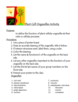 Plant Cell Organelles Activity