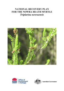 National Recovery Plan for Triplarina nowraensis