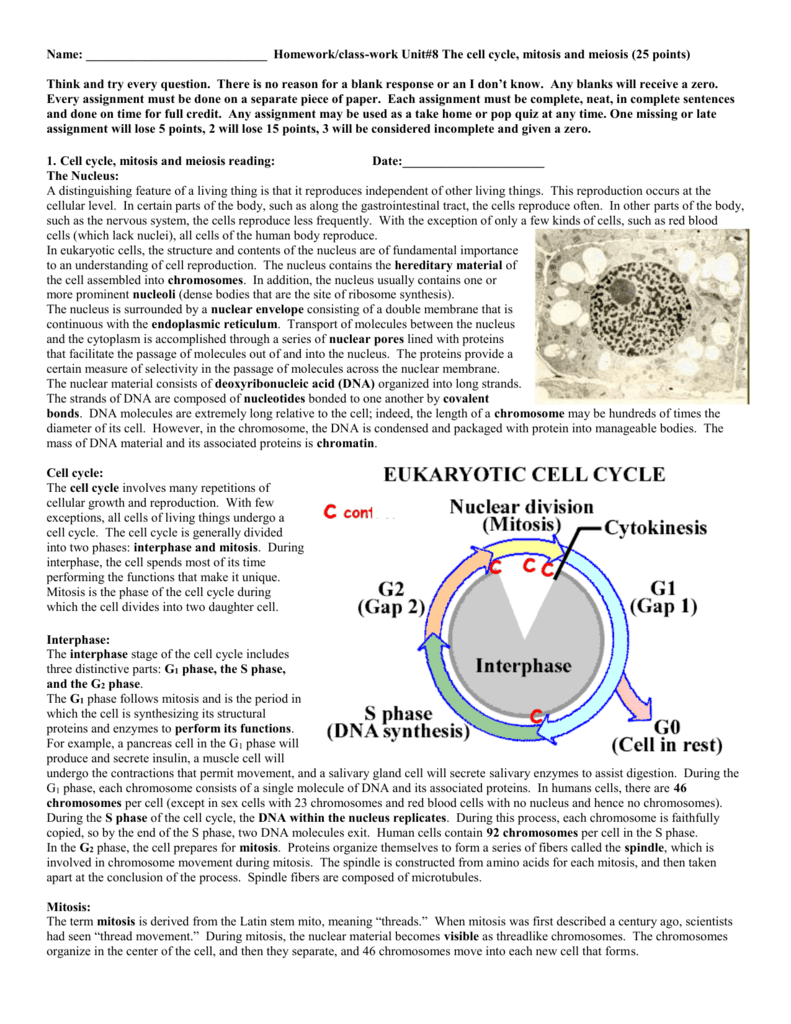 Cell Cycle Labeling Worksheet Answers Luxury Mitosis Worksheet as well Cell Cycle   Mitosis Notes and Microscope Lab   ళళళ   Biology furthermore  also Mitosis Worksheet Answers Biology also Luxury Mitosis And The Cell Cycle Worksheet Answers   Home moreover Cell Cycle Worksheet   Siteraven moreover 3  The Cell Cycle and Mitosis Worksheet  Date as well STAGES OF MITOSIS besides  furthermore Mitosis Coloring Worksheet Answer Key Cell Cycle Coloring Sheet the as well  together with Cell Division Diagram Labeled Elegant Cell Cycle Worksheet Answers additionally Cell Division And The Cell Cycle Worksheet   cell division and the moreover  additionally Mitosis Worksheet and Diagram Identification Answers Awesome also mitosis flip book worksheet answer key Archives nvaiud info. on cell cycle and mitosis worksheet