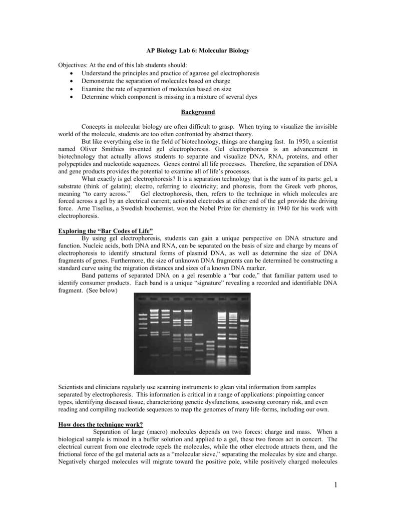 Official Lab Introduction To Agarose Gel Electrophoresis