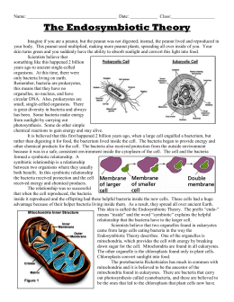 WS - Endosymbiotic Theory cells