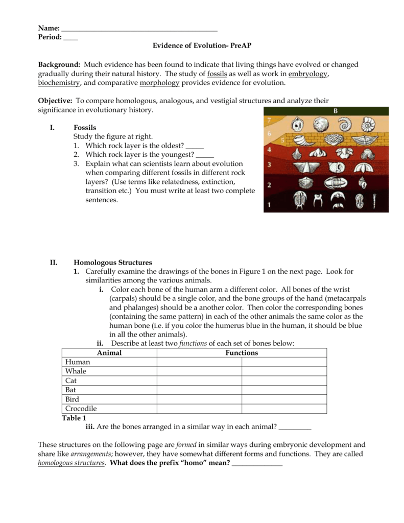 Evidence For Evolution Worksheet - Rringband