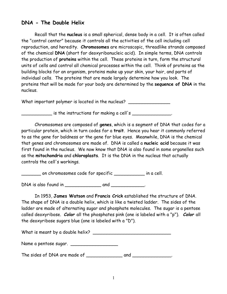 DNA The Double Helix – Dna the Double Helix Worksheet