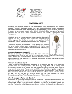 GIARDIA IN CATS - Liles Animal Clinic