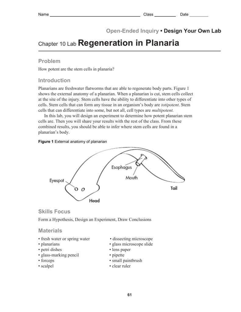 planaria lab