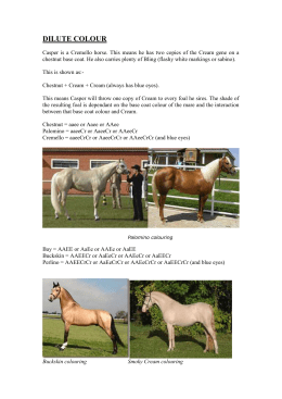 DILUTE COLOUR - Rushmoor Stud