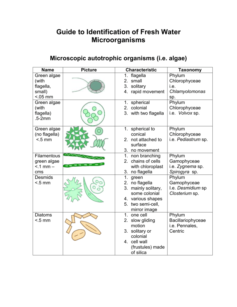 guide to identification of fresh water microorganisms rh studylib net What Are Protists Protist Identification Lab