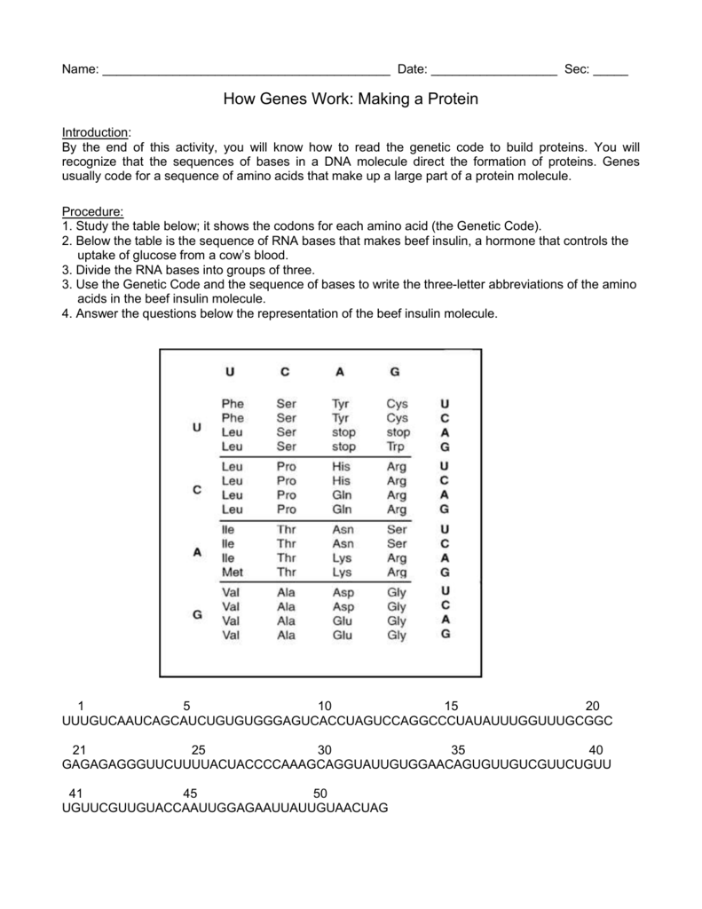 worksheet Dna Rna And Proteins Worksheet dna rna and protein synthesis crossword puzzle answers answer key protein