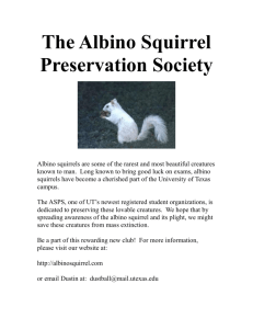 largeflyer - Albino Squirrel Preservation Society