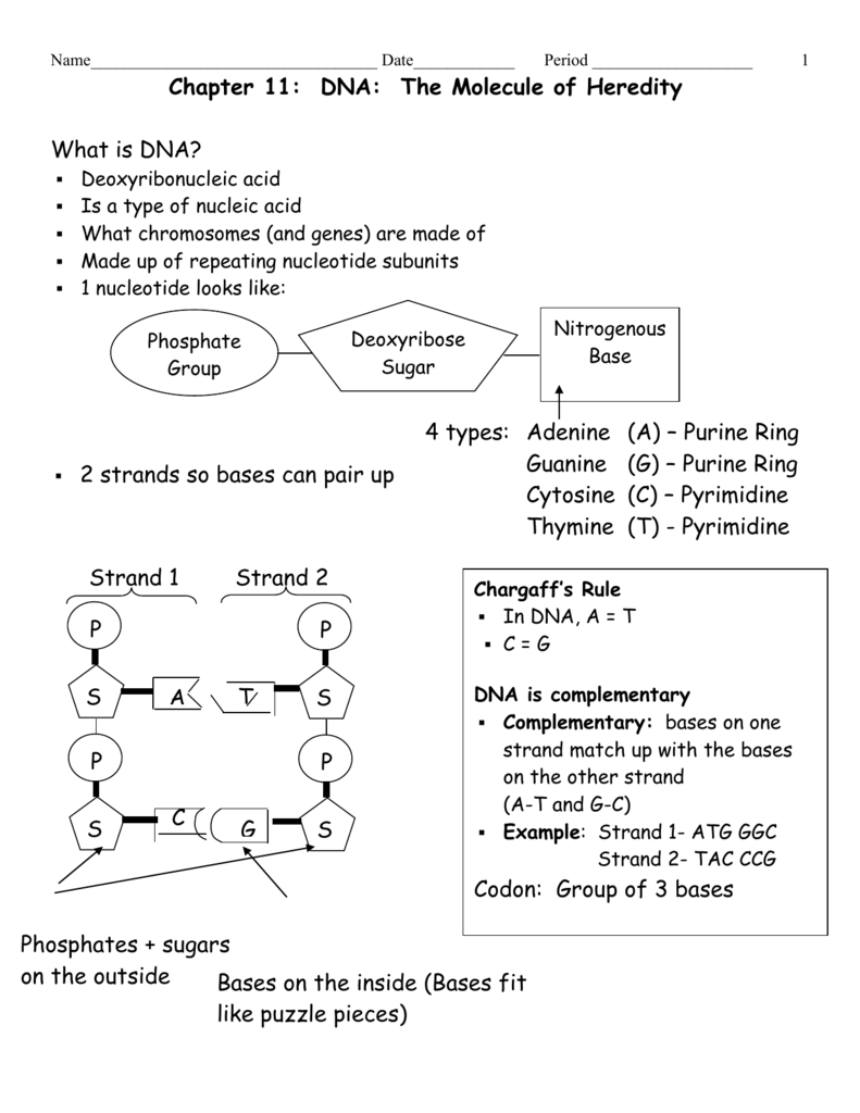 Dna The Molecule Of Heredity Worksheet - Tecnologialinstante