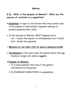 Notes: Meiosis