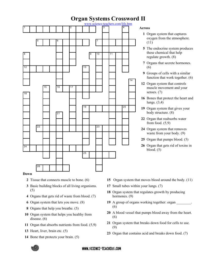 7th Grade Nervous System Crossword Puzzle Answer Key ...
