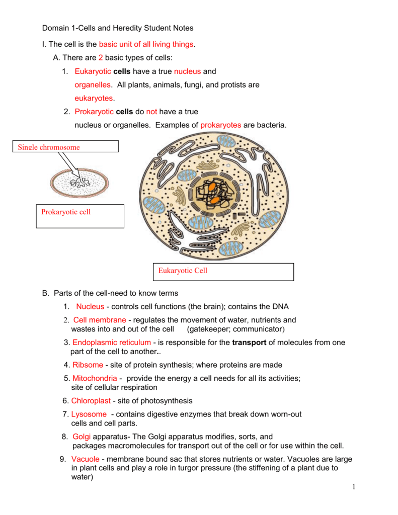 4 things cells do to maintain homeostasis - 4 Things Cells Do To Maintain Homeostasis 59