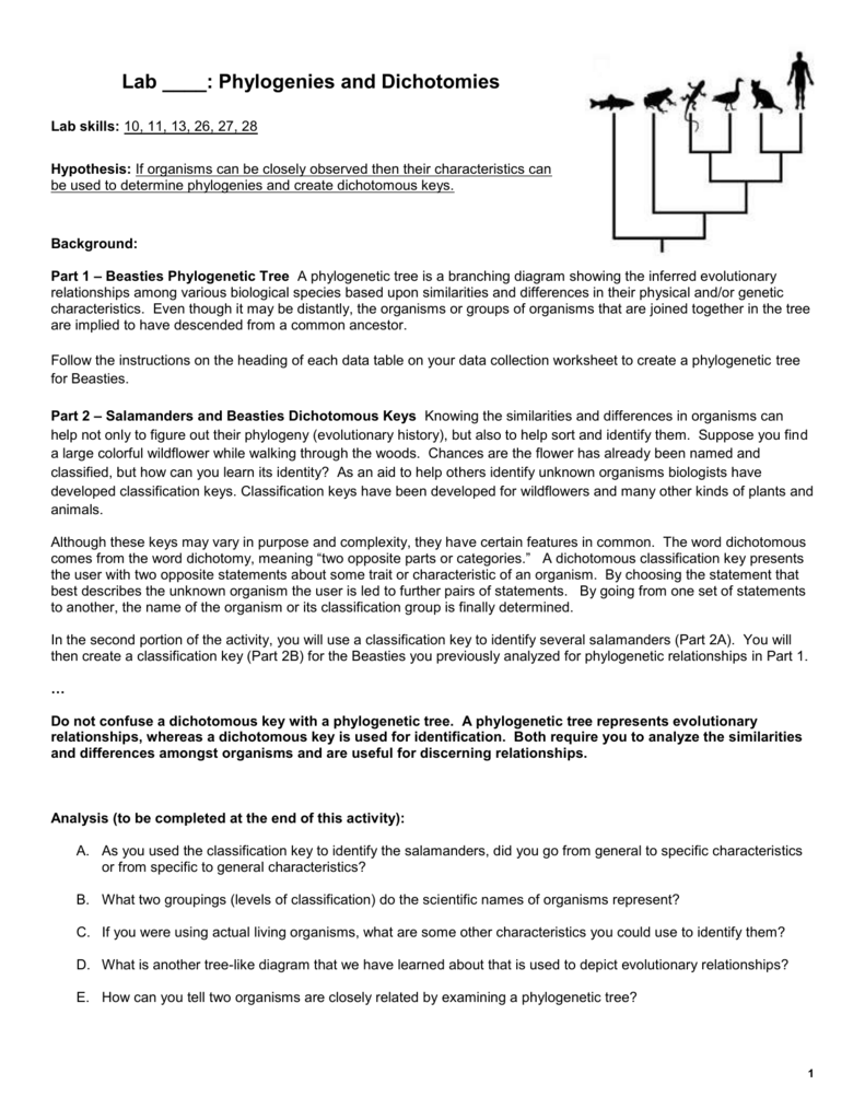 worksheet Phylogenetic Tree Worksheet lab 20 phylogenies and dichotomies