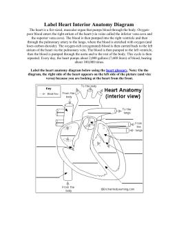 4 heart worksheet label heart interior anatomy diagram ccuart Images