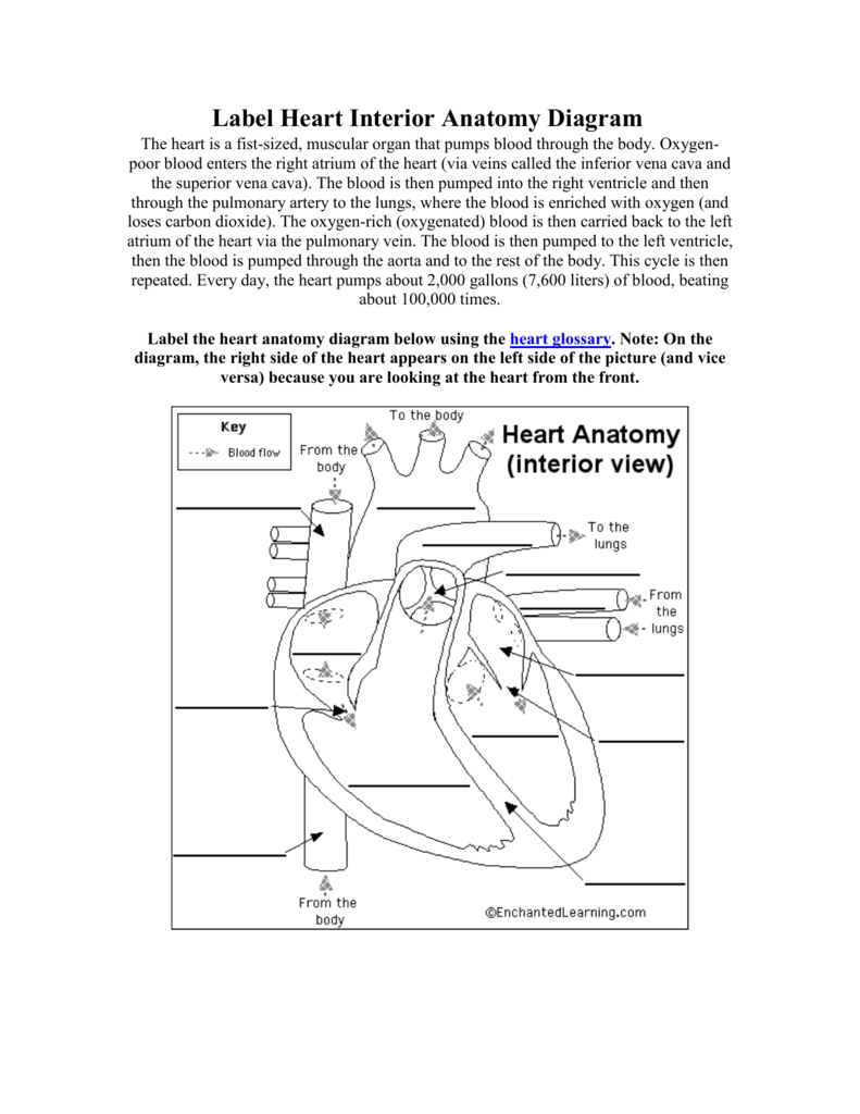 Label Heart Interior Anatomy Diagram