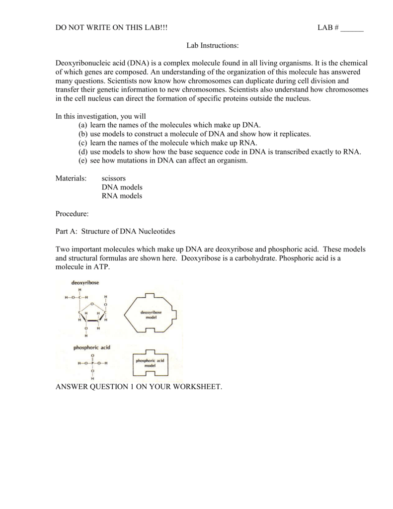 worksheet Chemistry Of The Gene Worksheet Answers lab instructions the master plan